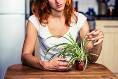 Woman tidying her plant Stock Image