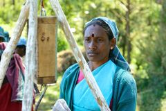 Woman to collect the tea away on tea plantations Royalty Free Stock Photos