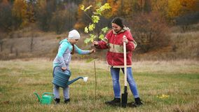 Woman, together with her daughter, plant a tree. Young woman, together with her daughter, plant a young maple tree. Against the background of a beautiful autumn stock video