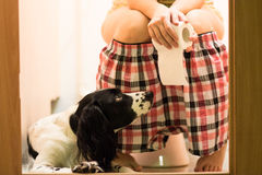 Woman on the toilet seat. Woman in pink and black shorts sitting on the toilet stool with a roll of toilet paper in her hands and a black and white spaniel dog Stock Photos