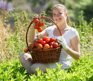 Woman with tomato harvest in garden Stock Photography