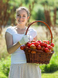 Woman with tomato harvest in garden Royalty Free Stock Image