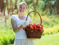 Woman with tomato harvest in garden Royalty Free Stock Photography