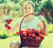 Woman with tomato harvest in garden Royalty Free Stock Photos