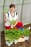 Woman with tomato seedlings Stock Photo