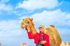 Woman touches camel. Happy woman touches and interacts with a camel in Doha city center, near Souq Waqif, the old market in Qatar. Caucasian tourist traveler in stock images