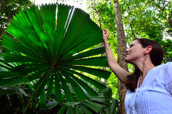Woman touches a Palm tree leaf in Queensland Australia. Young woman touches a Palm tree leaf in Daintree National Park in the tropical north of Queensland royalty free stock image
