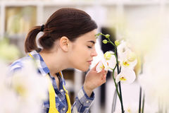 Woman touches and smells an orchid. White Stock Image