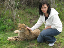 Woman touching Cheetah Stock Images