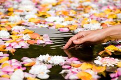 Woman touching flower petals Stock Photos