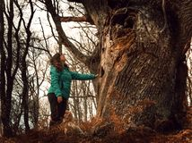 Woman touching an old tree in a forest in autumn royalty free stock photography