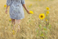 Woman touching sun flower on a field of wheat Royalty Free Stock Photography