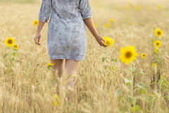 Woman touching sun flower on a field of wheat Stock Photo