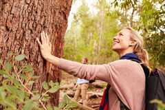 Woman touching a tree in a forest, husband in the background stock images