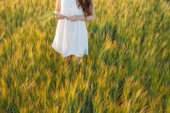 Woman touching wheat Royalty Free Stock Photography