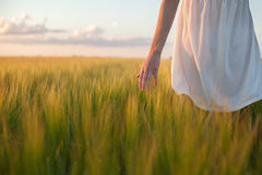 Woman touching wheat ear in wheat field Royalty Free Stock Images
