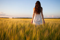 Woman touching wheat ear in wheat field Royalty Free Stock Image