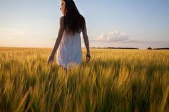Woman touching wheat ear in wheat field Stock Photos