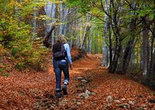 Woman tourist. Walking in the autumn forest Royalty Free Stock Photos