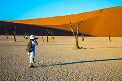 The woman - tourist photographing dried tree Royalty Free Stock Images