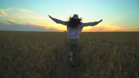 Woman tourist running in wheat field at summer sunset. Hiker traveler woman in hat with backpack hikking in nature. Girl. Walking outdoors. vacation travel stock video footage