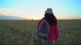 Woman tourist walking in wheat field at summer sunset. Hiker traveler woman in hat with backpack hikking in nature. Girl. Walking outdoors. vacation travel stock footage