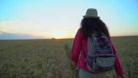 Woman tourist walking in wheat field at summer sunset. Hiker traveler woman in hat with backpack hikking in nature. Girl. Walking outdoors. vacation travel stock video