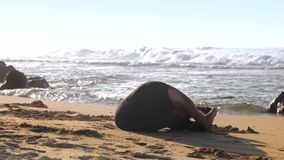 Woman in tracksuit practices yoga pose seated forward bend. Blonde woman in tracksuit practices yoga pose sat forward bend on warm morning beach against rolling stock video