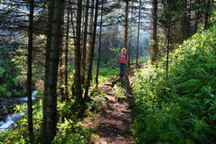 Woman on trail in woods Stock Images