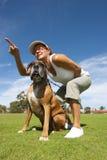 Woman training boxer bulldog Royalty Free Stock Photography