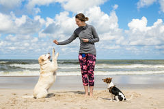 Woman training dogs. On the beach Stock Image