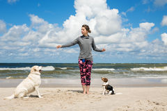Woman training dogs. On the beach Royalty Free Stock Photo