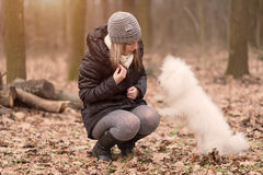 Woman training her dog in park Royalty Free Stock Image