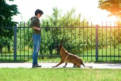 The woman is training her dog within restricted area. The dog is expecting reward for a trick Stock Image