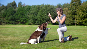 Woman training her dogs with a whistle. A woman training her two dogs by blowing a whistle Royalty Free Stock Image