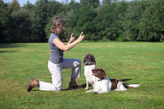 Woman training her two dogs. A woman training her dogs by pointing her fingers in the air Stock Images