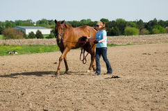 Woman training horse royalty free stock photos