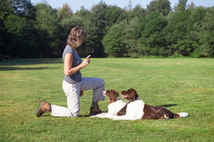 Woman training two dogs in a meadow. Woman training her two dogs in a meadow on a sunny day Stock Image