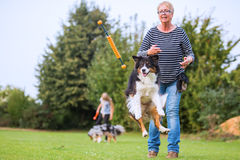 Woman trains with an Australian Shepherd royalty free stock photo