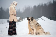 Woman trains Caucasian Shepherd and yard dog on a snowy ground in the park stock photos