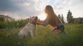 Woman trains her dog outdoor stock footage