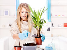 Woman transplant plant in a bigger pot Royalty Free Stock Photography