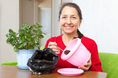Woman transplants potted flower Stock Photos