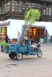 Female worker transports sugarcane on a motorbike, Tunxi, Huangshan, China stock photos