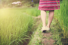 Woman traveler walking on green rice terraces field Stock Photos