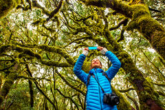 Woman traveling evergreen forest Royalty Free Stock Photo