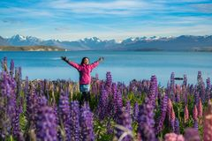 Tourist woman at lake Tekapo, New Zealand. Woman traveller at lake Tekapo, New Zealand. Lupin flower at lake Tekapo hit full bloom in December, summer season of Stock Images