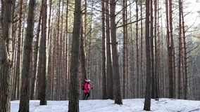 Woman travels through the woods. Girl with a backpack walking in the forest stock footage