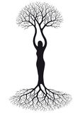 Woman tree. Illustration with  tree silhouette of woman Royalty Free Stock Image