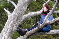 Woman in tree. Cradle Mountain, Tasmania, Australia Stock Photos